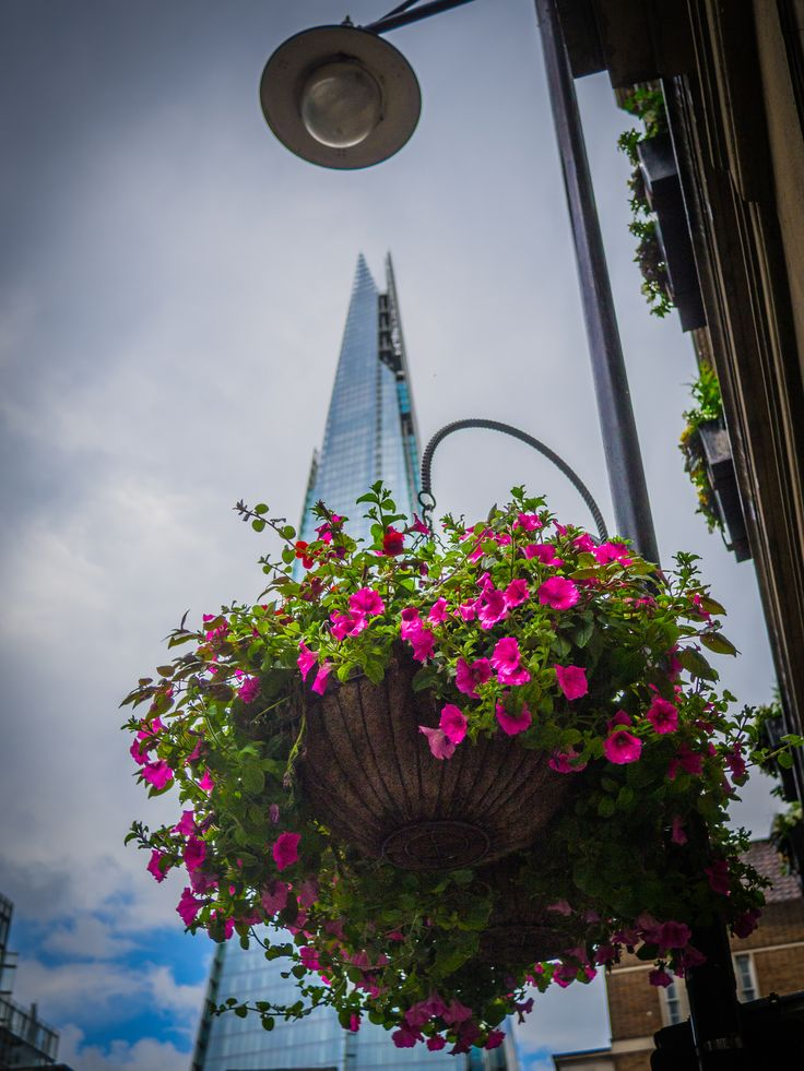 The Shard in Bloom