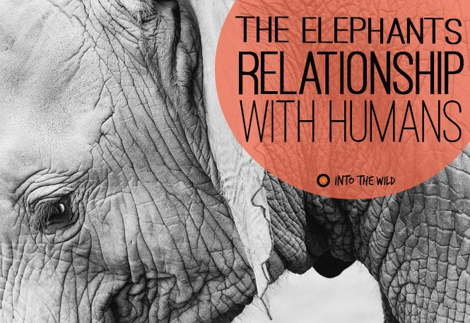 whales and humans a conflicted relationship