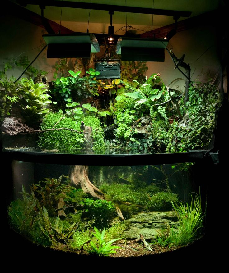 Paludarium with Birds <--- so awesome! (Not a dart frog setup, mostly because it isn't fully enclosed but...)