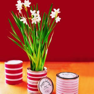 Grow Narcissus indoors in winter - good for decoration and then party favor...would decorate planter differently...