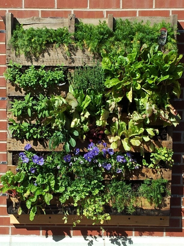 Gardening Ideas For Schools every school should have a garden Western Avenues School Vertical Garden
