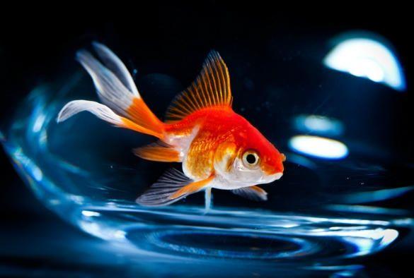 تفسير حلم السمك Check More At Https 3jeba Com D8 Aa D9 81 D8 B3 D9 8a D8 B1 D8 Ad D9 84 D9 85 D8 A7 D9 84 D8 B Goldfish Aquarium Accessories Pet Warehouse