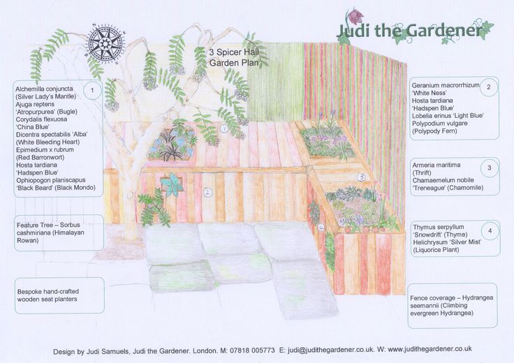A small courtyard garden brought to life with this innovative garden design by Judi the Gardener Designs