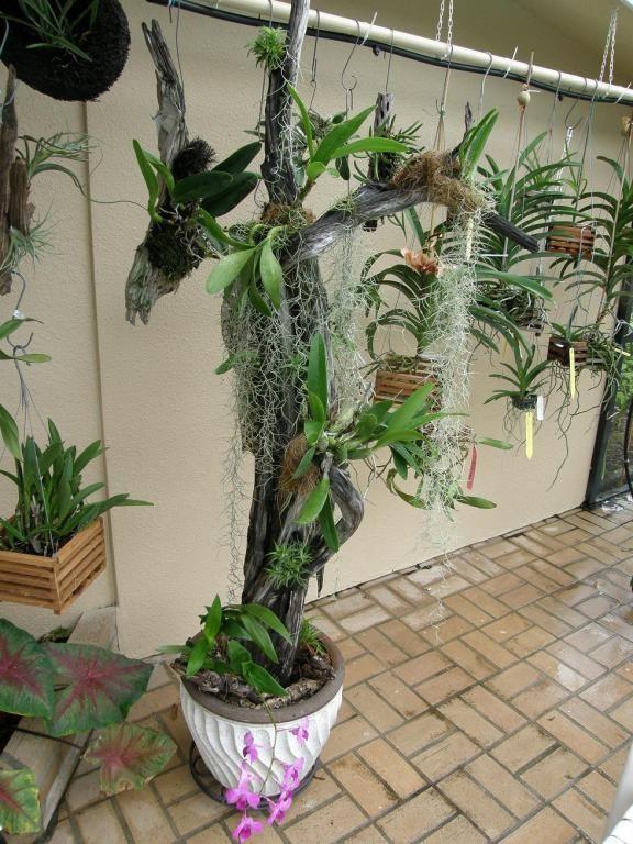 Indoor Hanging Flower Baskets