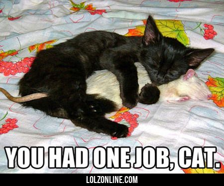 You Had One Job, Cat