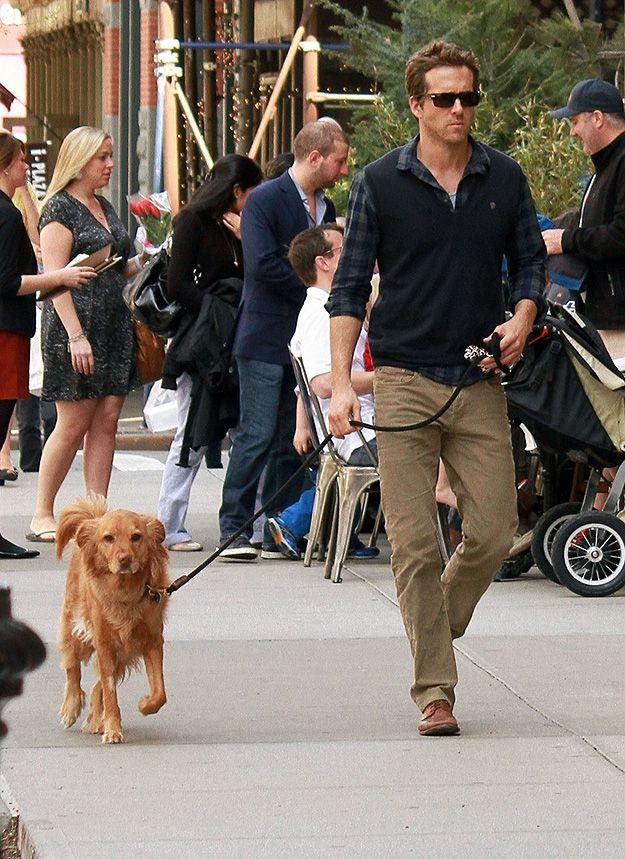 Recently he can be seen walking his dog Baxter… | A Brief Timeline Of Ryan Reynolds With Dogs