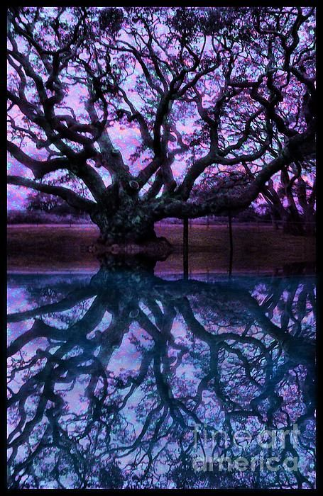 The Old Oak Tree Mixed Media by Tisha McGee - The Old Oak Tree Fine Art Prints and Posters for Sale #Art #Tree #Reflection