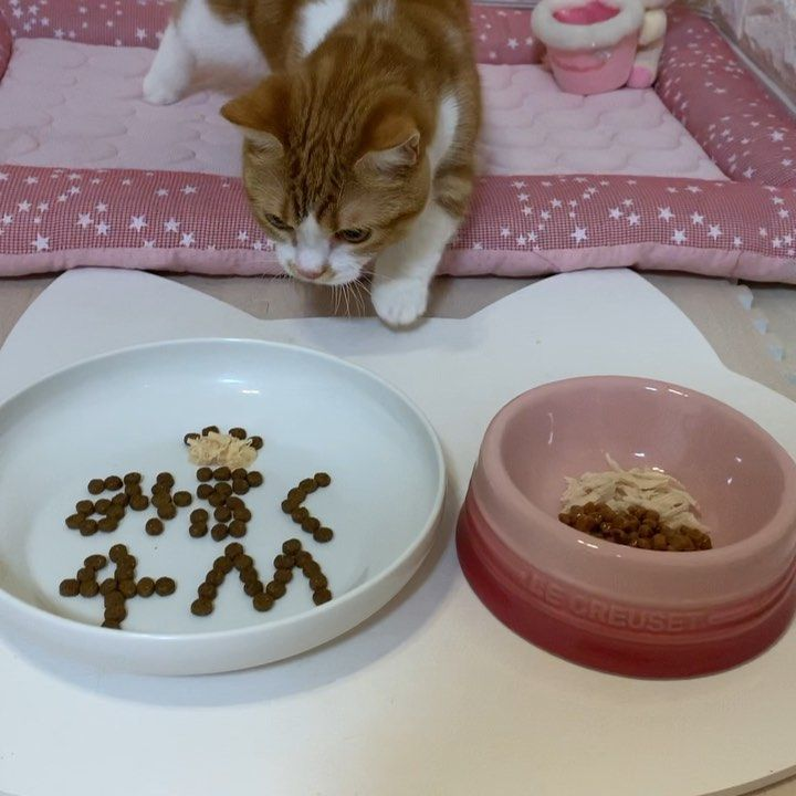 My Cat Wont Eat Or Drink What Can That Mean With Images Dog Bowls