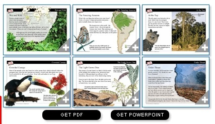 Introduce the amazing rain forest with the PowerPoint slideshow in this science mini-lesson.