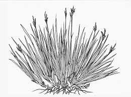Image Result For Drawing Grass Trees Drawing Tutorial