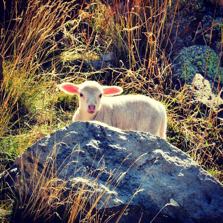 Hello world ! :-) #Vars #VarsFob #MyHautesAlpes #TourismePACA #Montagne #Automne