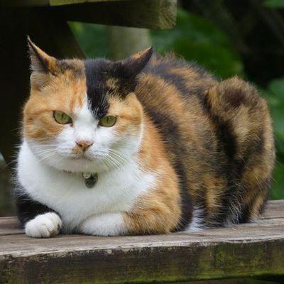 第5位 花子(ペンション菜の花館)全国の宿・ホテルの看板猫