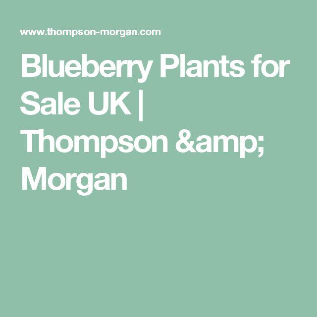 Blueberry Plants for Sale UK | Thompson & Morgan