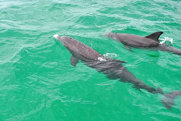 Things To Do With Kids in Destin, Florida