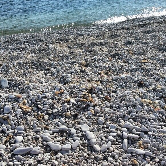 Love at the beach ♡ #Smöjen