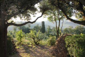 Toskana für Ruhesuchende