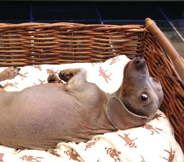 Heated Dog Bed #pet #sleeping