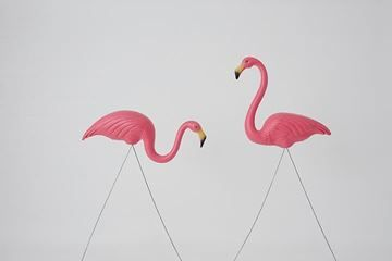 Show details for Flamingo - 2pk