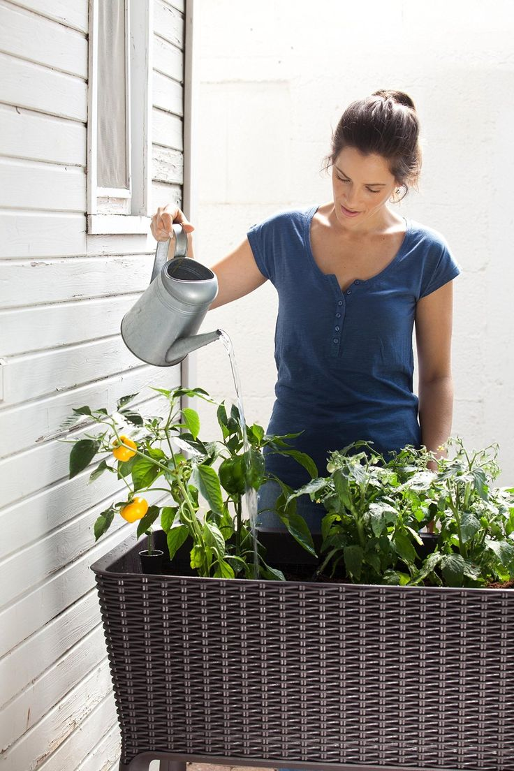 Amazon.com : Keter Elevated Garden Bed/Plant Box : Planter Boxes : Patio