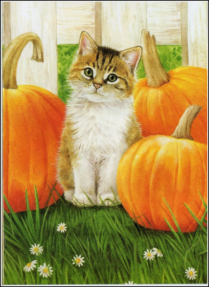 https://flic.kr/p/88WDsZ | Calender cat | This is October cat sitting among the pumpkins!