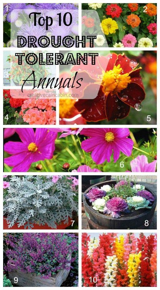 Top 10 Drought Tolerant Annuals - 1. Angelonia, 2. Zinnia, 3. Ornamental Pepper, 4. Geranium, 5. Marigold, 6. Cosmo, 7. Dusty Miller, 8. Ornamental Kale, 9. Ageratum, 10. Snapdragon