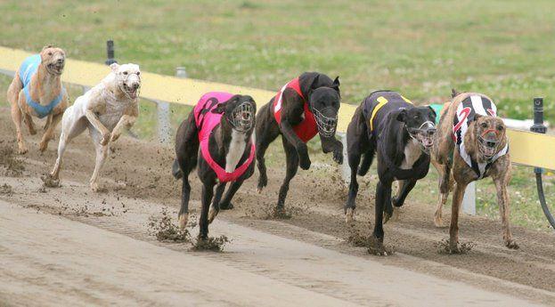 La Comisión de Justicia y Asuntos Penales del Senado de la Nación, firmó el proyecto de ley donde se prohiben en todo el país las carreras de perros.