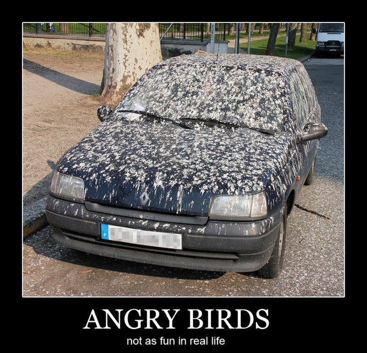 Angry Birds in real life. Man did they cover that car or
