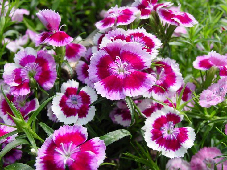 Ya es #primavera y puedes adornar tu casa con estas #plantas #ornamentales.