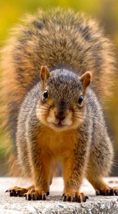 Please don't chop the trees down- you are destroying my habitat and killing my family.
