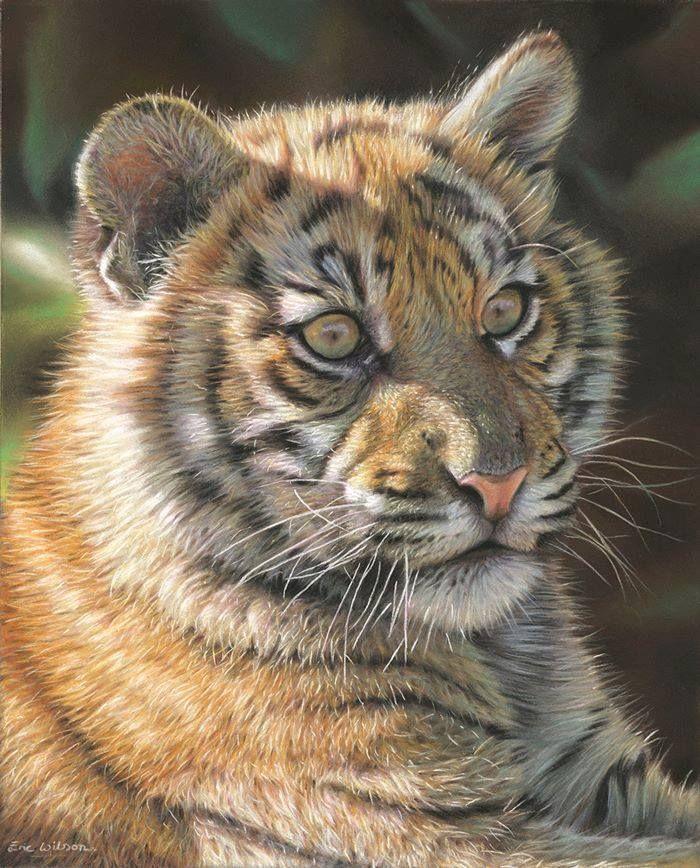 Préférence 249 best Animal art <3 images on Pinterest | Wildlife art, Cat art  WQ19