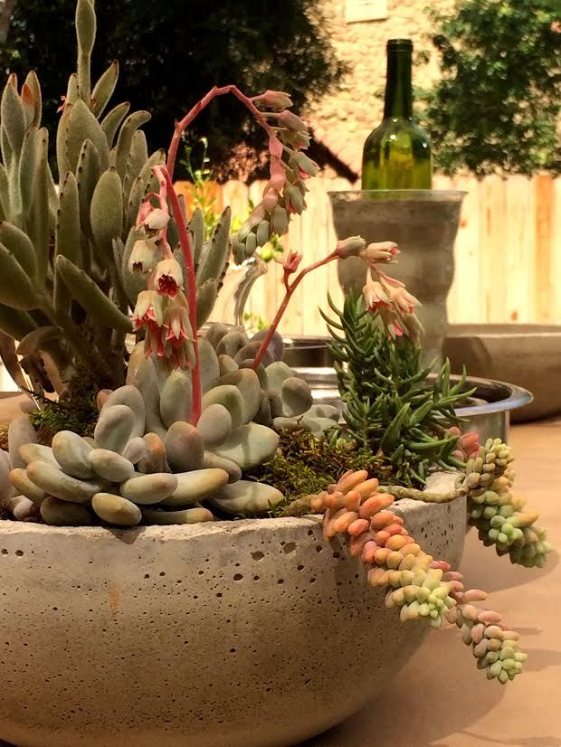Make #concrete bowls with @Kenneth Wingard ! Perfect for planting #succulents! #DIY #crafts #HomeandFamily #HomeandFamilyTV