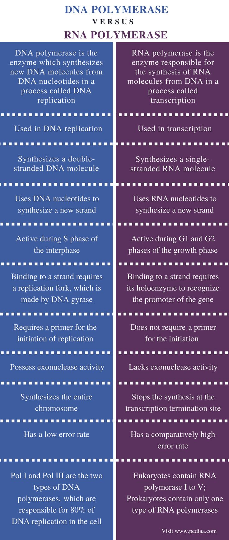 Difference Between DNA and RNA Polymerase Rna polymerase