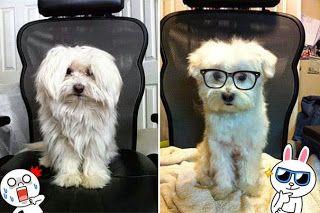 Σκύλοι που μεταμορφώθηκαν με ένα κούρεμα! [photos]