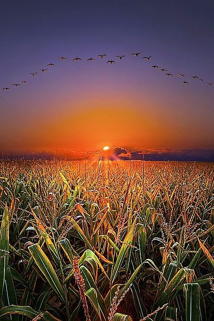 Amazing Snaps: The Picturesque view of Sunset and Birds
