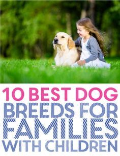 The 10 Best Dog Breeds for People with Families