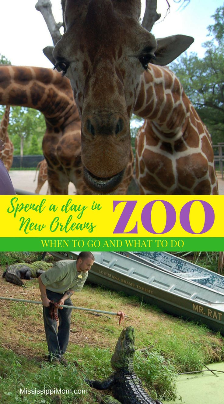Take your family to Audubon Zoo in New Orleans - When to go and What to do