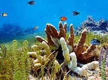 All secrets of underwater life http://newfreescreensavers.com/new-free-screensavers/downloads/fish-screensavers