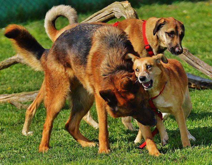 Právní poradna: Náhrada škody při zranění psa ve rvačce s jiným psem