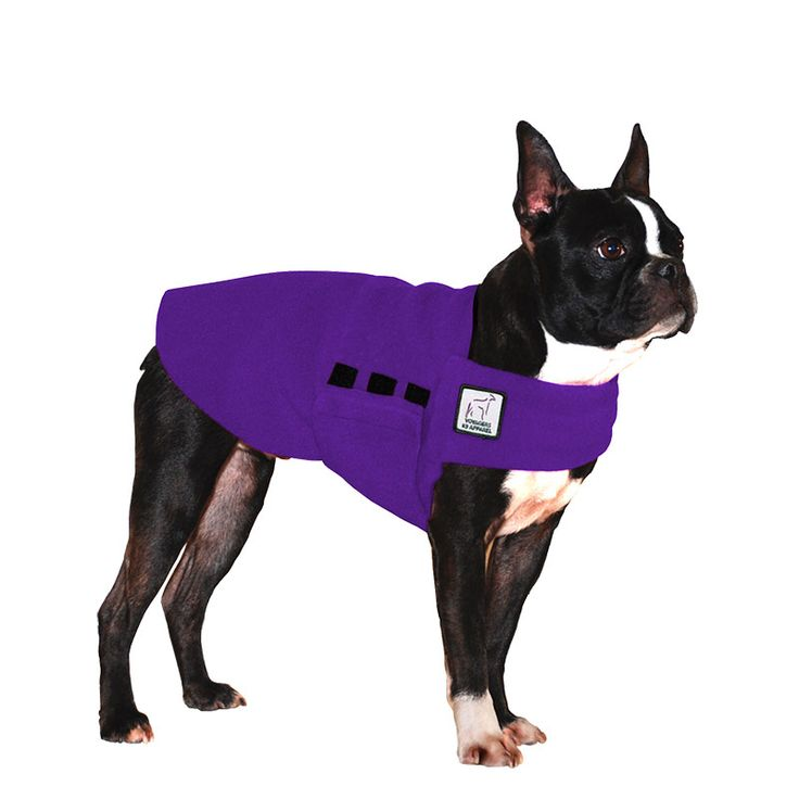 Purple Boston Terrier Dog Tummy Warmer, great for warmth, anxiety and laying with our dog rain coat. High performance material. Made in the USA.