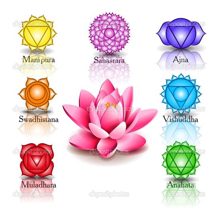 flor de loto y los 7 chacras