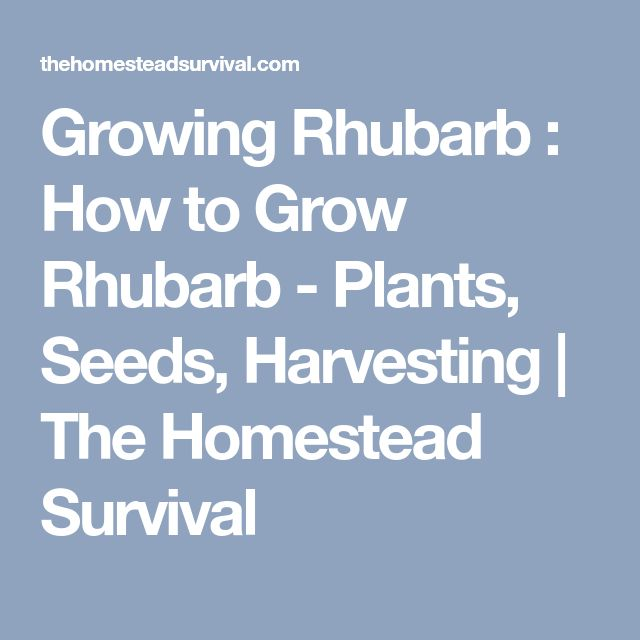 Growing Rhubarb : How to Grow Rhubarb - Plants, Seeds, Harvesting | The Homestead Survival