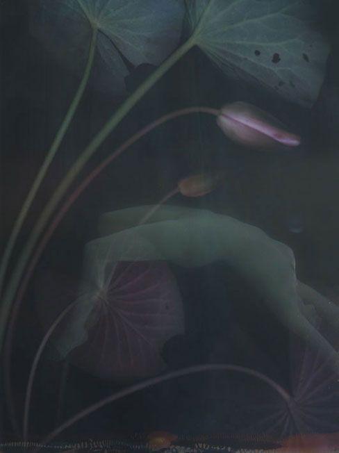Liliroze - Nympheas Poetic Water lilly print