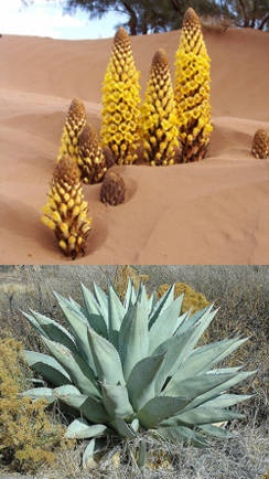 102 best images about plantas del desierto on pinterest for Plantas que hay en un vivero