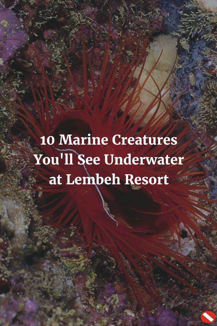Best Diving Destinations Images On Pinterest Diving Have - The snorkeling guide to florida 10 spots for underwater exploring