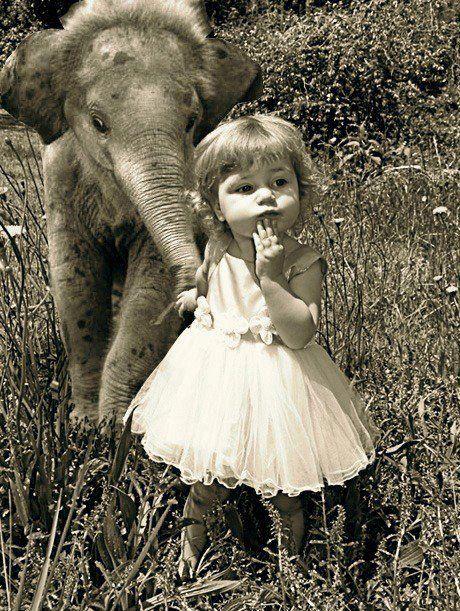 elephants | Tumblr