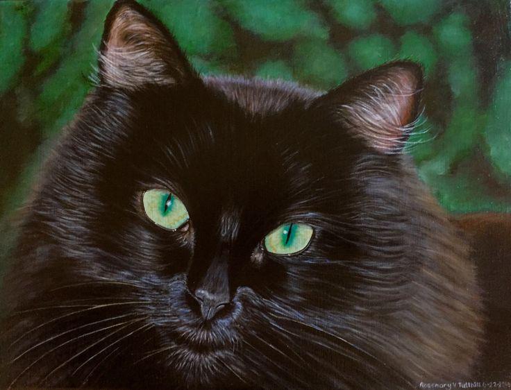 wild tom cat