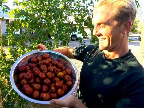 Every Home Garden Should Have this Fruit Tree - YouTube - chinese date / jujube tree