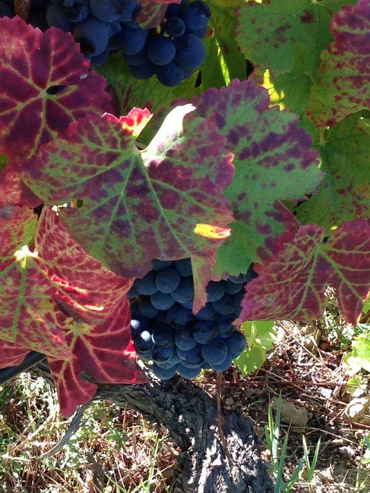 Harvest - already with autumn colours