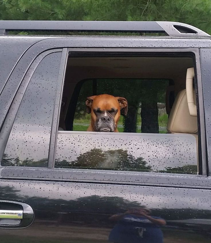 My friends dog is not happy about leaving the dog park early!