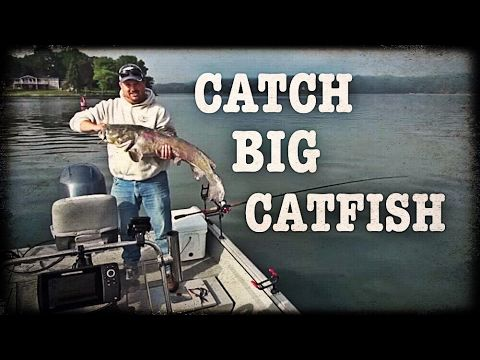 CATCH BIG CATFISH with Tennessee River Monsters - YouTube